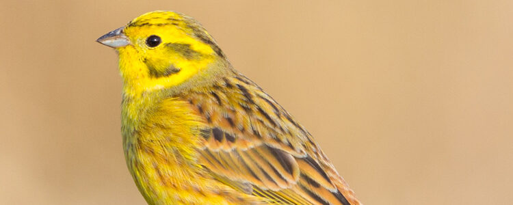 Should the Operation Yellowhammer Report have been released for public viewing?